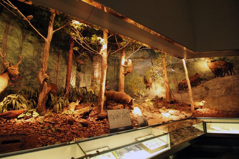 【飯田市】飯田市美術博物館でプラネタリウムを見学してきました。
